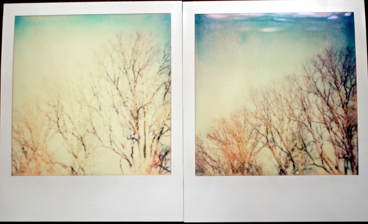 600 Impossible PX film in polaroid