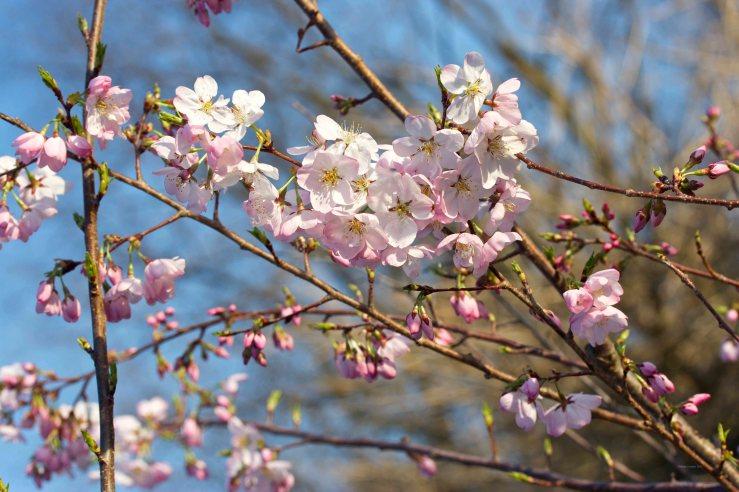Cormier_spring_flowers040913_IMG_1489watermarked